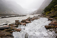 On a rainy day in Franz Josef Glacier Valley. The ice of the glacier terminus may collapse at any time and an already risen Waiho River will deposit loose ice rocks many kilometres away from the glacier - Westland National Park, West Coast