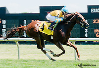 Starry winning at Delaware Park on 6/1/13