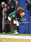 The Baylor Bear mascot sneaks out to mess around during the 2010 Texas  Bowl football game between the Illinois  Fighting Illini and the Baylor Bears at the Reliant Stadium in Houston, Tx. Illinois defeats Baylor 38 to 14....