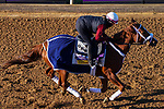 November 3, 2020: Point Of Honor, trained by trainer George Weaver, exercises in preparation for the Breeders' Cup Distaff at Keeneland Racetrack in Lexington, Kentucky on November 3, 2020. John Voorhees/Eclipse Sportswire/Breeders Cup/CSM