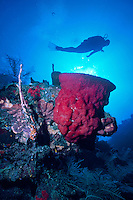 Scuba Diver floats above a Red Vase or Cup Sponge on the North Wall of Grand Cayman Island, BWI.