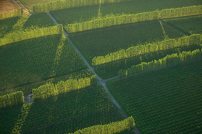 Trees used as wind breaks on irrigated fields