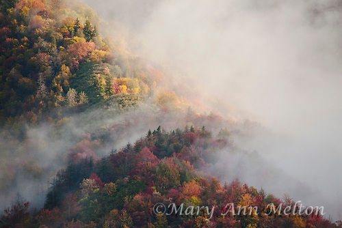 Fog gently drifts over a ridge covered with autumn trees