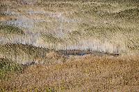 Salt marsh.