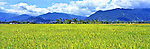 Vietnam Panorama - Paddy fields in central Vietnam.<br /> <br /> Image taken on large format panoramic 6cm x 17cm transparency. Available for licencing and printing. email us at contact@widescenes.com for pricing.