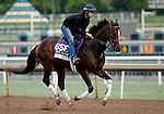 ARCADIA, CA - OCT 31: Texas Chrome, owned by Keene Thoroughbreds LLC and trained by J. R. Caldwell, exercises in preparation for the Breeders' Cup Las Vegas Dirt Mile at Santa Anita Park on October 31, 2016 in Arcadia, California. (Photo by Zoe Metz/Eclipse Sportswire/Breeders Cup)
