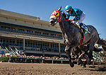 HALLANDALE FL - FEBRUARY 27: X Y Jet  #5, ridden by <br /> Emisael Jaramillo is victorious in  the Gulfstream Park Sprint Stakes at Gulfstream Park on February 27, 2016 in Hallandale, Florida.(Photo by Alex Evers/Eclipse Sportswire/Getty Images)