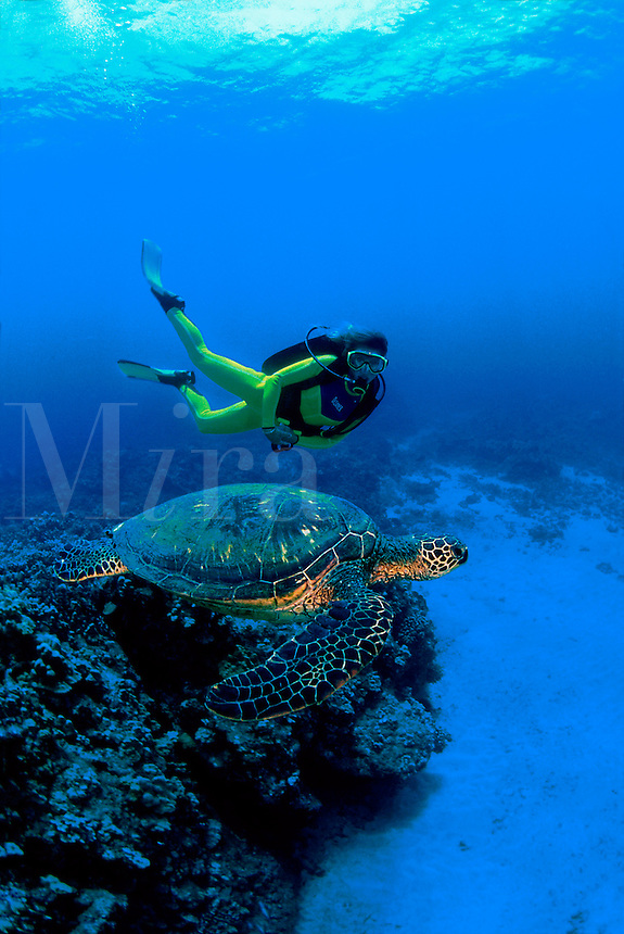 DIVER AND A GREEN SEA TURTLE Chelonia mydas HAWAII  scuba equipment (MR) island underwater diving sport kicks fish fishes diver underwater turtles