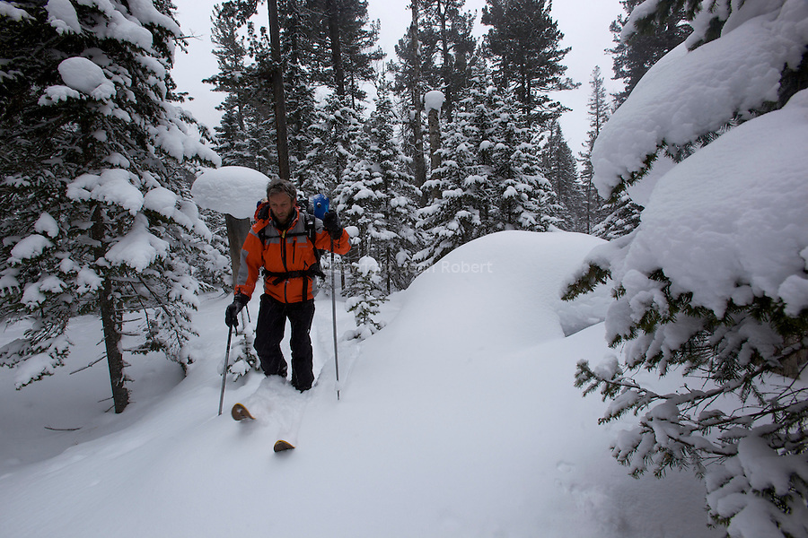 country ski on the forests nearby Snejaia river on  the khamar Daban  mountains on the east side of the baikal lake