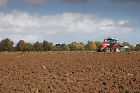 15-10-2021 Ploughing land following a cauliflower crop in the Lincolnshire Fens.<br />  ©Tim Scrivener Photographer 07850 303986<br />      ....Covering Agriculture In The UK....
