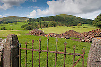 View over a metal gate and piles of harvested timber, Whitewell, Lancashire.