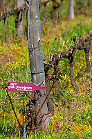 Vines pruned for winter in Cordon Royat and a sign saying it is Cabernet Sauvignon grapes. Bodega Pisano Winery, Progreso, Uruguay, South America