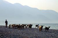 - pastore e greggie di capre sulla spiaggia di  Qeparò, nel sud del paese....- shepherd and herd of goats on the beach of Qeparò, in the south of the country