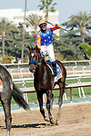 ARCADIA, CA  APRIL 3:  #3 Rock Your World, ridden by a celebrating Umberto Rispoli, after winning the Santa Anita Derby (Grade l) on April 3, 2021 at Santa Anita Park, in Arcadia, CA.(Photo by Casey Pnillips/ Eclipse Sportswire/ CSM)