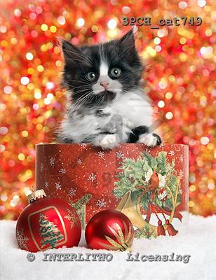 Xavier, CHRISTMAS ANIMALS, photos+++++,SPCHCAT749,#xa#