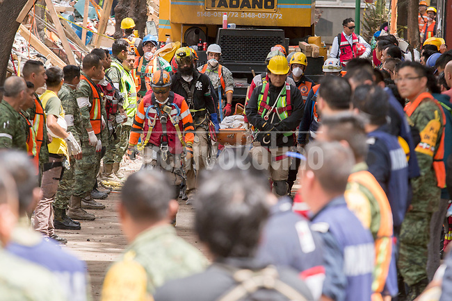 Rescue workers carry a body of a person killed by the   collapse of a  building in the South of Mexico DF city.