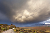 Dramatic clouds lighted by evening sunshine hover over the Denali Park road of Denali National Park, Interior, Alaska.