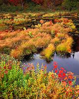 Bog near the Raquette River; Adirondack Park and Preserve, NY