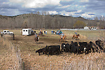 Eastern Oregon, John Day country, calf roundup, spring tagging and inoculations, Highway 395, Mount Vernon, Northeastern, Oregon, Pacific Northwest, U.S.A., ranch country, cowboys, calves, calf roundup,