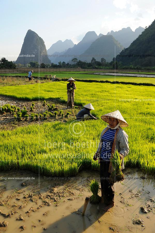 LAO PDR, Vang Vieng, paddy fields infront of limestone mountains , women replant rice plants  / LAOS Vang Vieng , Reisfelder vor Kalkstein Bergkulisse , Frauen pflanzen Reissetzlinge um