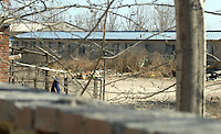 The Chinese Small Action Protection Committe at Xie Bei Wang Town, Da niu fong village, Beijing suberbs.  Cats are being abandonded in large numbers and are ending up in Government compounds, like this one, where they slowly die.