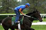 June 4, 2014: Matuszak Belmont Stakes contender morning works at Belmont. Sue Kawczynski/ESW/CSM