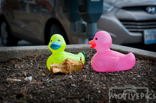Me and my rubber duckies around St. Louis.