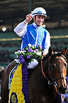 7 November 2009:  Goldikova (f) with O. Preslier up (#11) takes the $2 Million Breeder's Cup Turf Mile at Oak Tree at Santa Anita in Arcadia California.