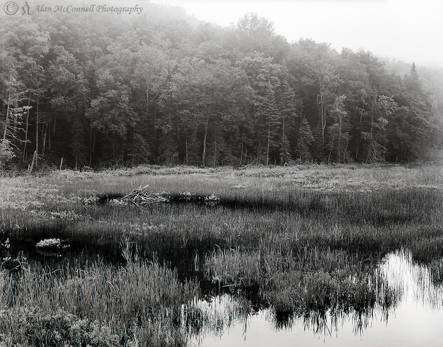 """""""Beaver Lodge""""<br /> Adirondacks<br /> New York State<br />  2009<br /> <br /> An undisturbed beaver lodge sits peacefully in an unnamed Adirondack pond between the villages of Indian Lake and North Creek.  A multitude of lakes and ponds could be seen through the fog while driving along Highway 28 on an early Sunday morning.<br /> <br /> 4 x 5 Large Format Film"""