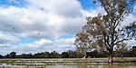 Riverina Landscape, Currawana Wetlands, Currawana NSW
