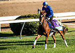 October 29, 2018 : Line of Duty (IRE), trained by Charlie Appleby, exercises in preparation for the Breeders' Cup Juvenile Turf  at Churchill Downs on October 29, 2018 in Louisville, Kentucky. Evers/ESW/CSM