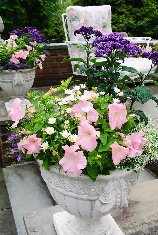 Cement pot container garden of petunia, chrysanthemum, Helioptropium, Euphorbia, on stone patio near chair patio furniture