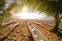 Hawaiian Paddling canoes under a palm tree in the sun, Haleiwa Beach park, North Shore Oahu