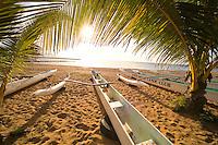 Hawaiian Paddling canoes under a palm tree in the sun, Haleiwa Beach park, North Shore Oahu