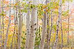 Autumn color in Acadia National Park, Maine, USA