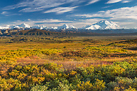Denali and the Alaska Range mountains, autumn tundra, Denali National Park, Alaska.