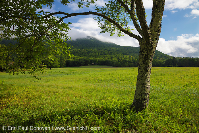 Cook's Pasture along Diamond Ledge Road in Sandwich, New Hampshire during the summer months.