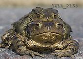 Carl, ANIMALS, wildlife, photos(SWLA2164,#A#)