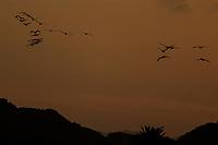 Pelicans fly at sunset in Bahia Kino in Sonora, Mexico (Photo: Luis Gutierrez / NortePhoto.com).<br /> <br /> Pelicanos vuelan al atardecer en bahia Kino en Sonora, Mexico.(Photo: Luis Gutierrez / NortePhoto.com).