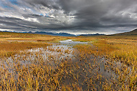 Tundra wetlands on the south side of the Alaska Range mountains, Interior, Alaska.