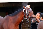 October 21, 2015:  Beholder, trained by Richard Mandella, and owned by B. Wayne Hughes, cross entered in the Breeder's Cup Classic Grade 1 $5,000,000, and the Breeder's Cup Distaff $2,000,000.  Candice Chavez/ESW/CSM