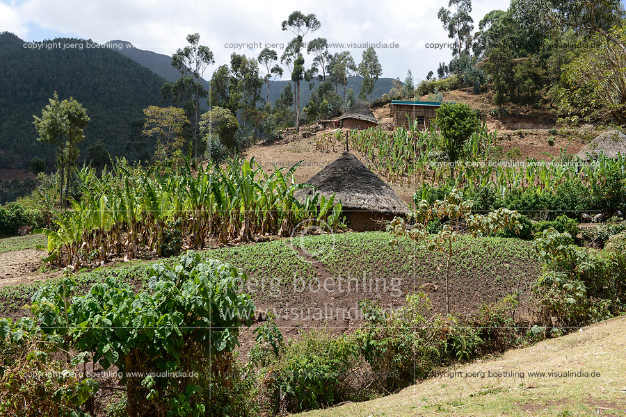 ETHIOPIA, Taza, Kambata village / AETHIOPIEN Taza, Kambata Dorf Sululu