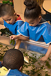 Education Preschool 3-4 year olds girl and boys in Head Start program playing with seaweed and plastic fish at water table