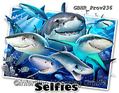 Howard, REALISTIC ANIMALS, REALISTISCHE TIERE, ANIMALES REALISTICOS, selfies, paintings+++++Shark Selfie,GBHRPROV236,#a#, EVERYDAY ,unterwater,maritime,sharks,