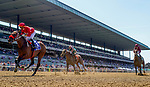 June 5, 2021: Letruska, #3, ridden by jockey Jose Ortiz, wins the Ogden Phipps Win and You're In Stakes on Belmont Stakes Day at the Belmont Stakes Festival at Belmont Park in Elmont, New York. Alex Evers/Eclipse Sportswire/CSM