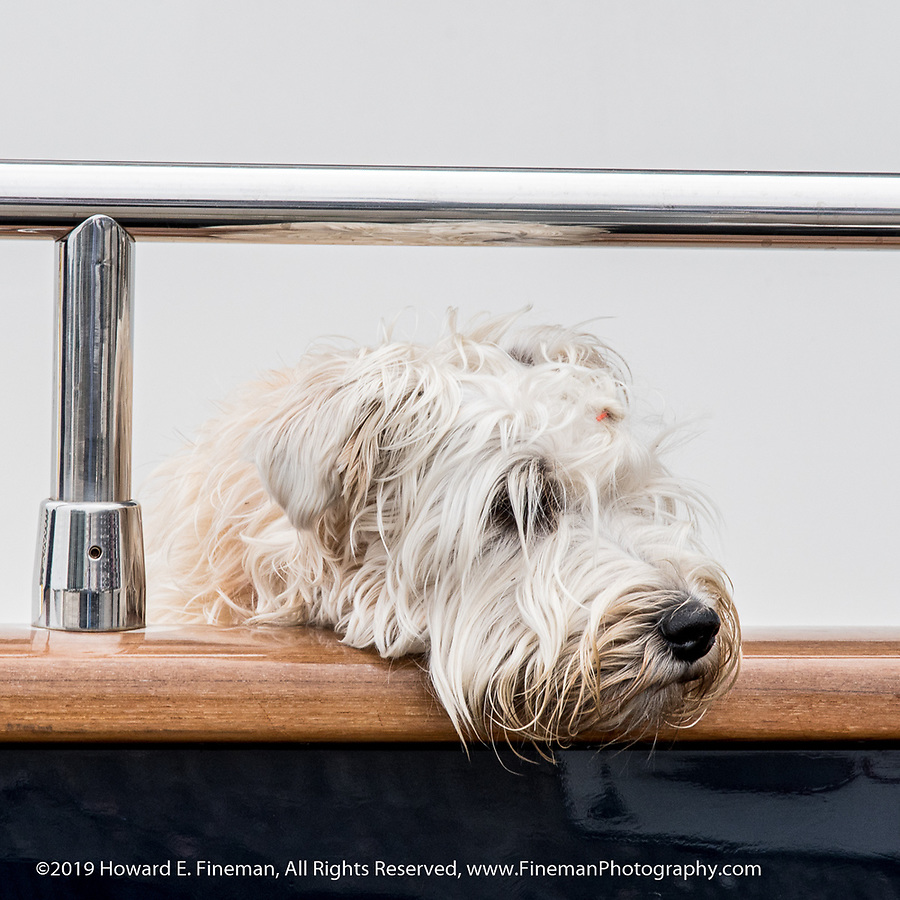 A happy camper residing on his master's sailboat home in Kristiansand