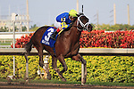 Thunder Moccasin by himself on his way to winning the Hutcheson Stakes(G2) at Gulfstream Park. Hallandale Beach, Florida. 02-11-2011