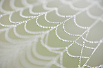 Brazoria County, Damon, Texas; a spider web covered in early morning dew drops of water
