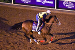 November 5, 2020: Sconsin, trained by trainer Gregory D. Foley, exercises in preparation for the Breeders' Cup Filly & Mare Sprint at Keeneland Racetrack in Lexington, Kentucky on November 5, 2020. John Voorhees/Eclipse Sportswire/Breeders Cup/CSM