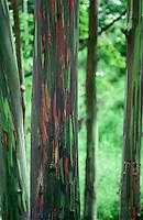 Tree bark<br />